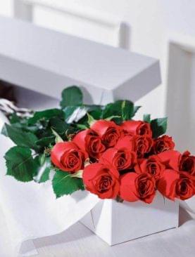 BOXED PREMIUM ROSES - 12 ROSES